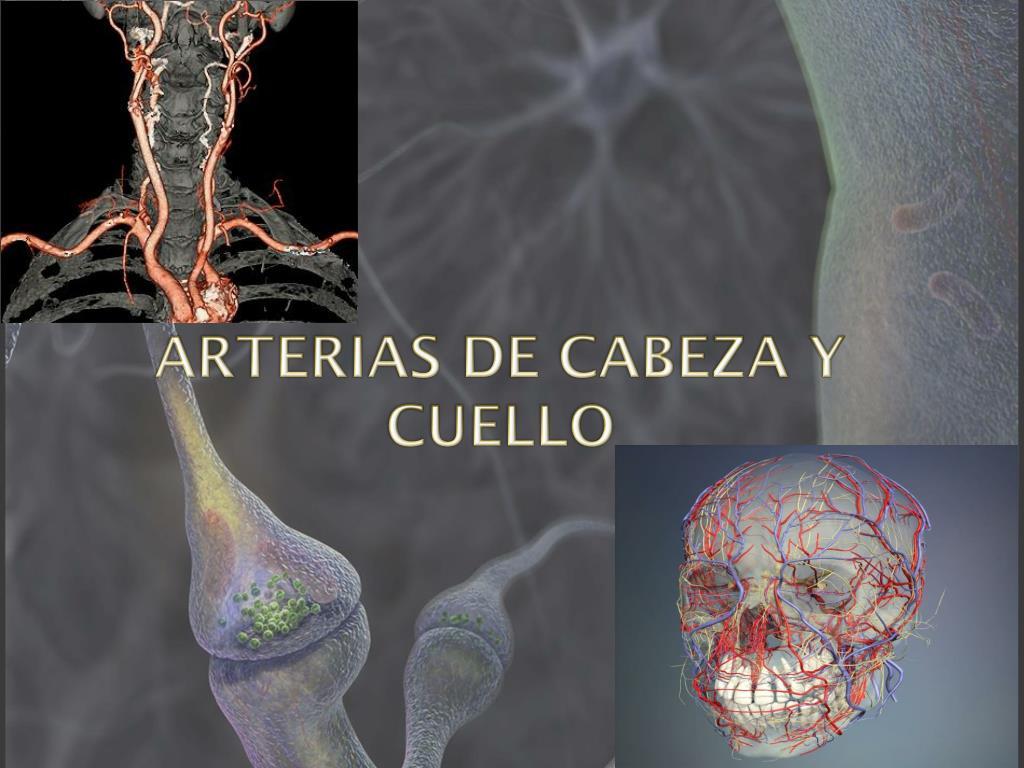 PPT - ARTERIAS DE CABEZA Y CUELLO PowerPoint Presentation - ID:2935015