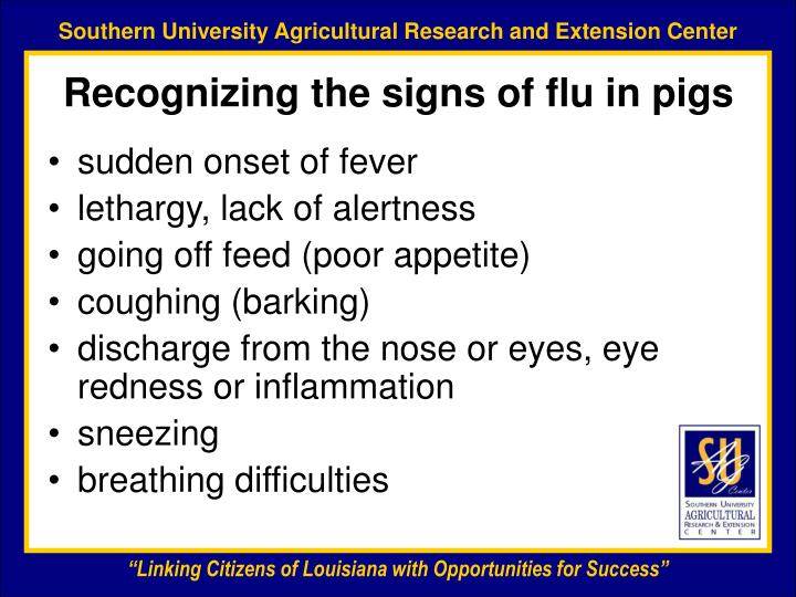 Recognizing the signs of flu in pigs