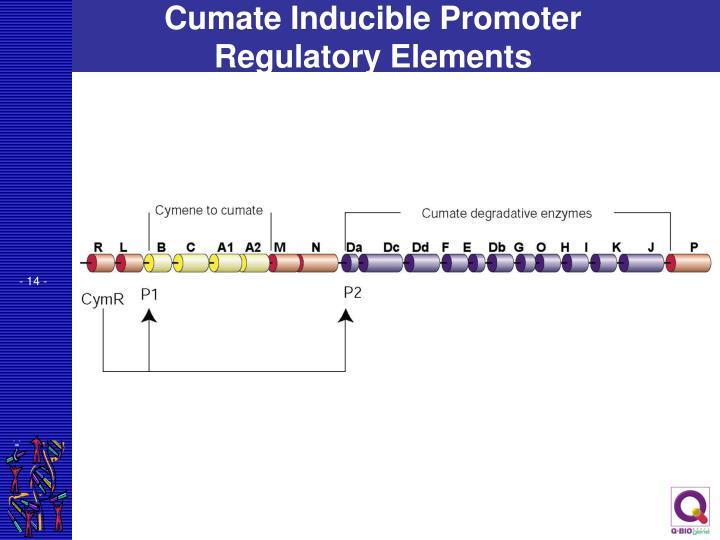 Cumate Inducible Promoter Regulatory Elements