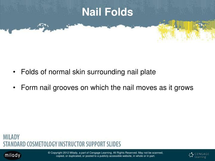 PPT - Chapter 9 Nail Structure and Growth PowerPoint Presentation ...