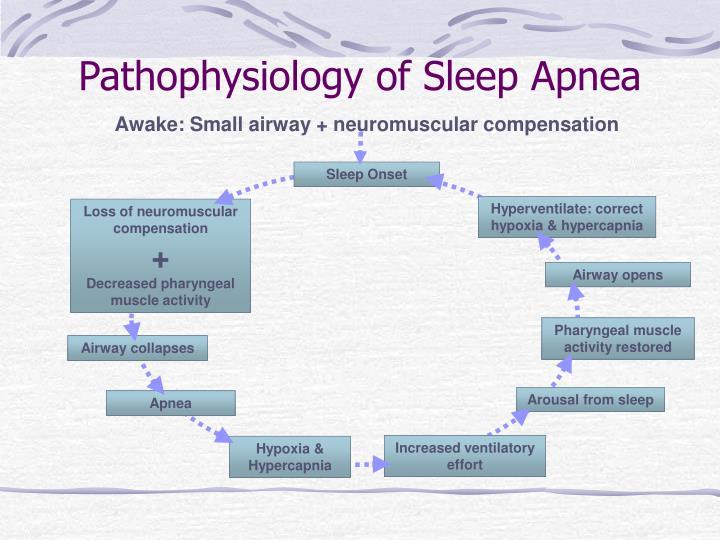 Pathophysiology of Sleep Apnea
