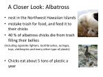 a closer look albatross
