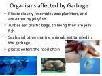 organisms affected by garbage