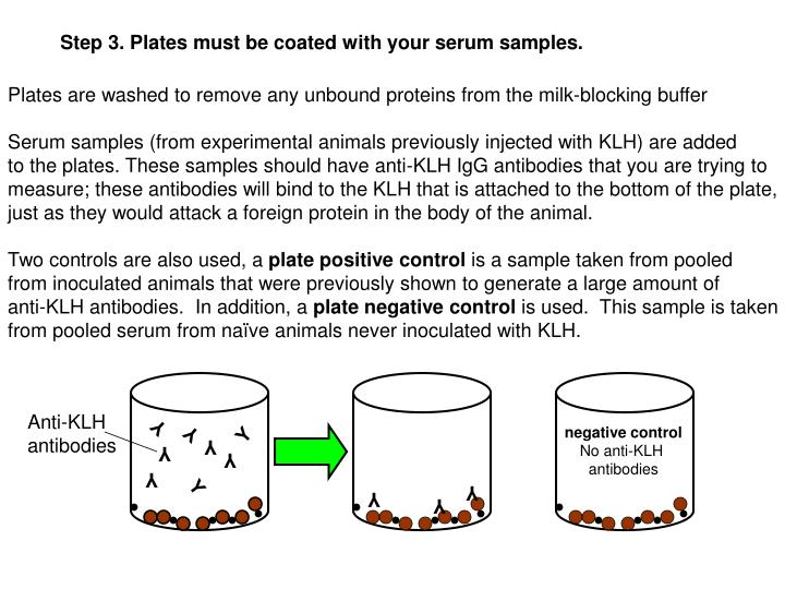 Step 3. Plates must be coated with your serum samples.