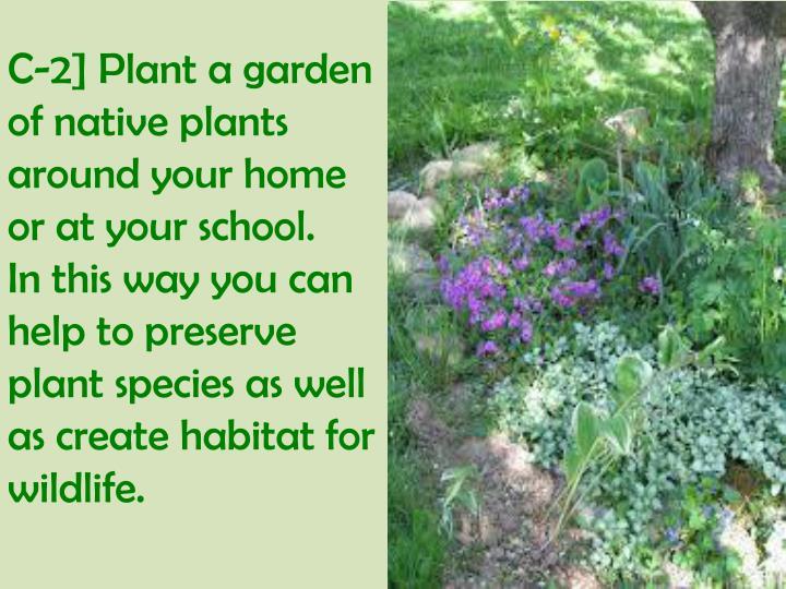 C-2] Plant a garden