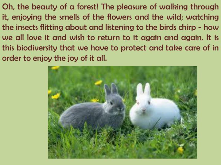 Oh, the beauty of a forest! The pleasure of walking through it, enjoying the smells of the flowers a...