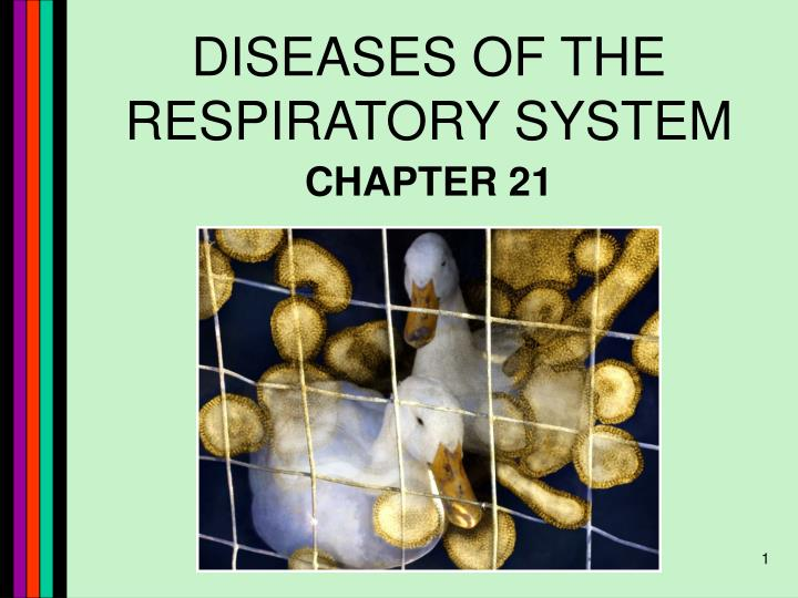 Ppt Diseases Of The Respiratory System Powerpoint Presentation