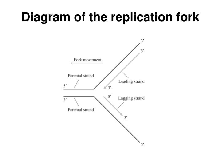 ppt - dna replication powerpoint presentation
