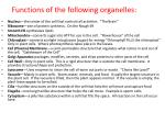 f unctions of the following organelles