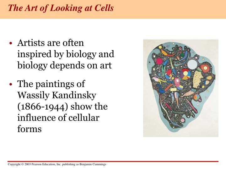 The art of looking at cells