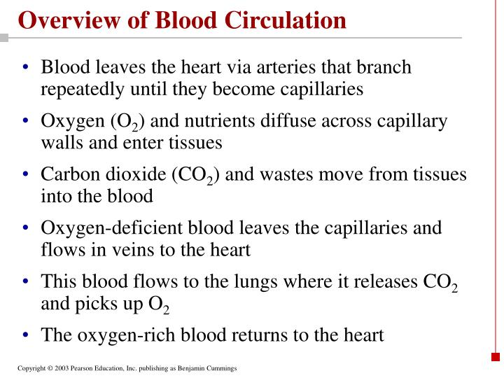Overview of blood circulation