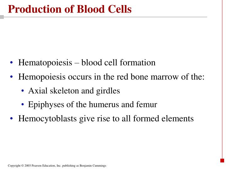 Production of Blood Cells