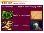 ecology decomposers