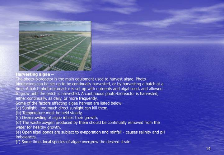 Harvesting algae –