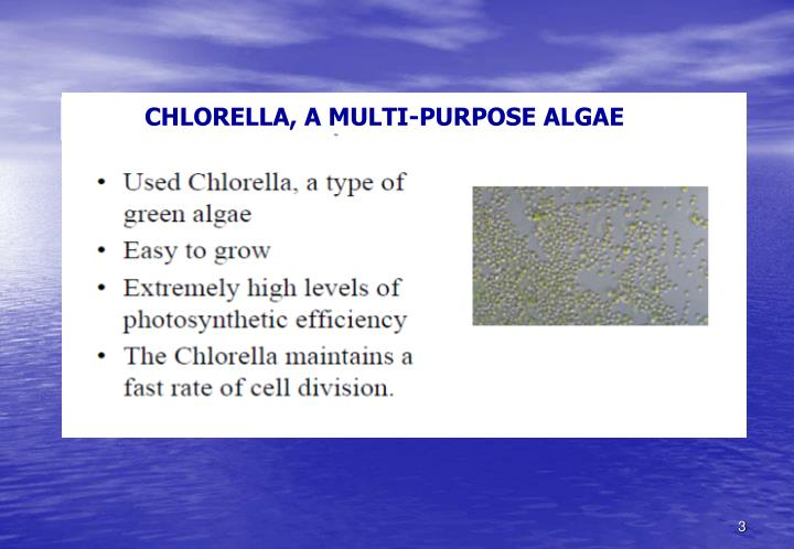 CHLORELLA, A MULTI-PURPOSE ALGAE