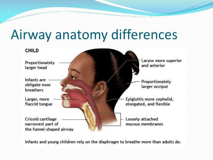 PPT - Pediatric Airway Management PowerPoint Presentation - ID:2942775