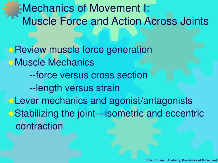 Mechanics of movement i muscle force and action across joints