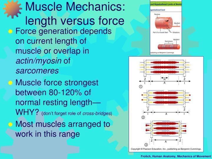 Muscle Mechanics:
