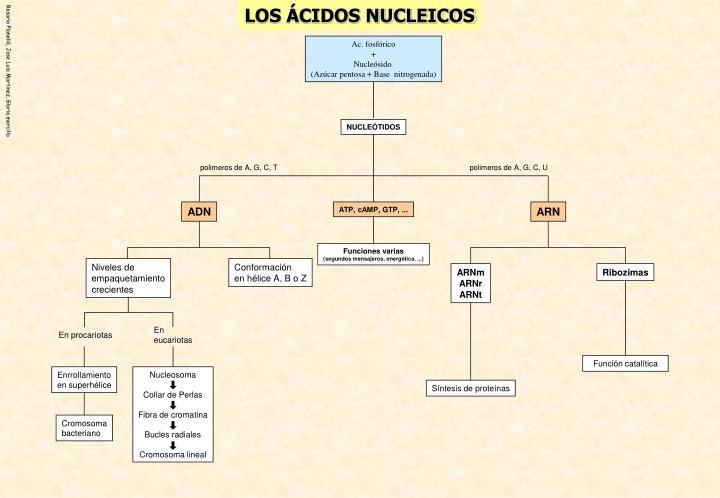 LOS ÁCIDOS NUCLEICOS