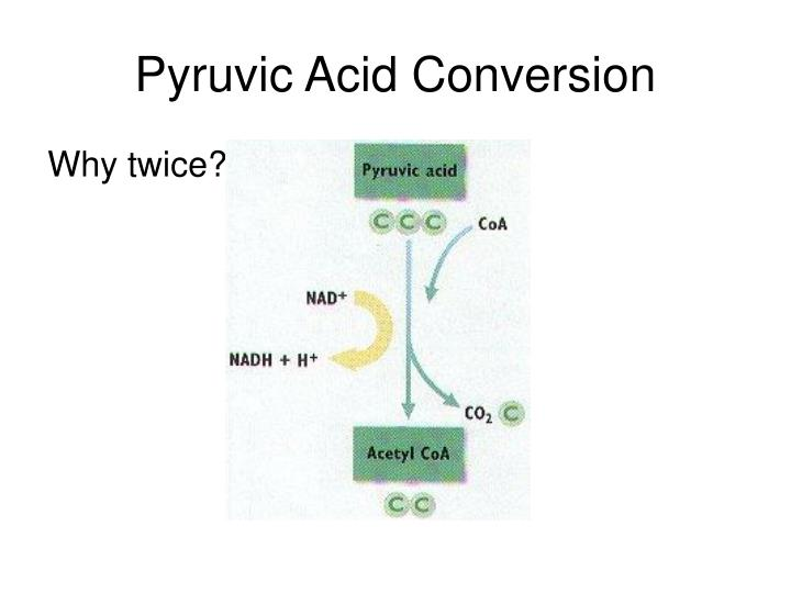 Pyruvic Acid Conversion