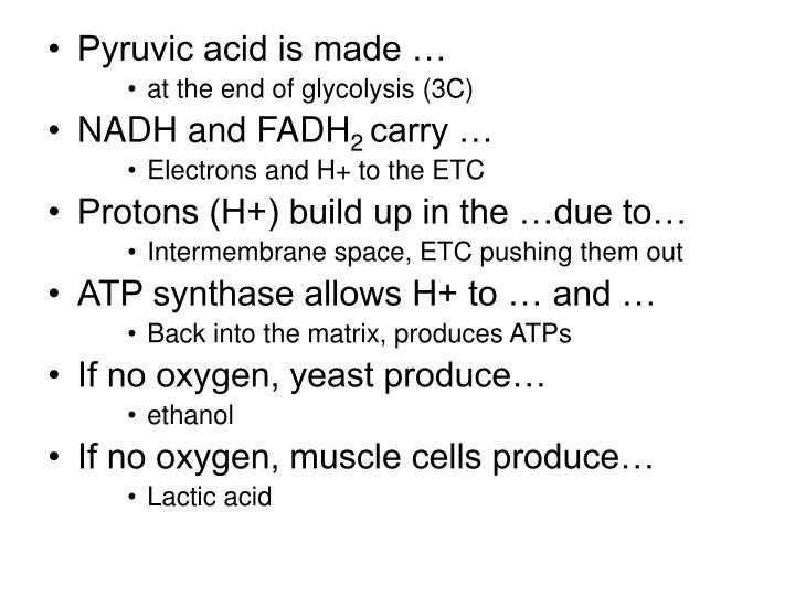 Pyruvic acid is made …