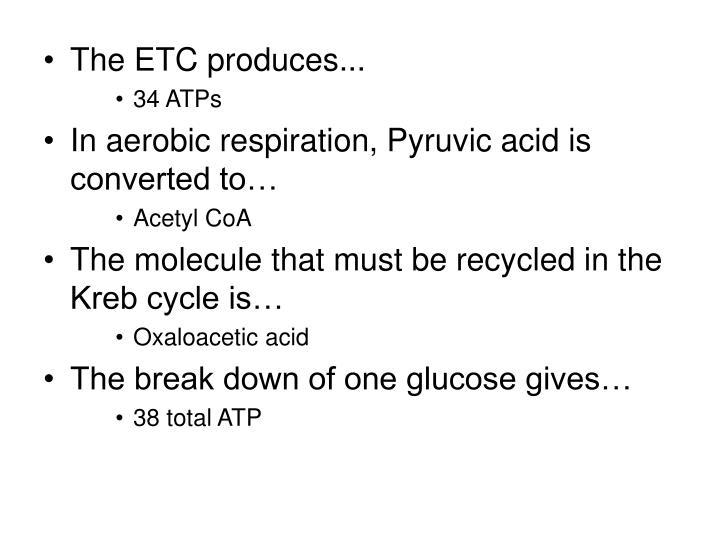The ETC produces...