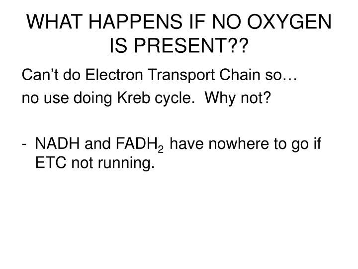WHAT HAPPENS IF NO OXYGEN IS PRESENT??