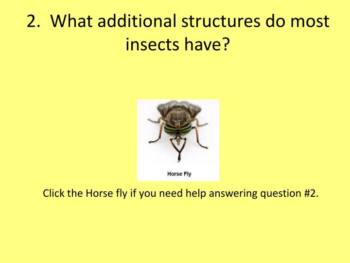 2.  What additional structures do most insects have?