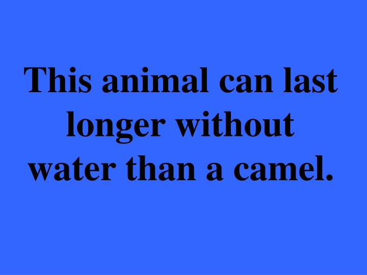 This animal can last longer without water than a camel.