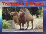 transition chasm