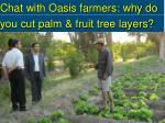 chat with oasis farmers why do you cut palm fruit tree layers