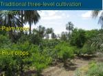 traditional three level cultivation system palm trees fruit crops annual crops