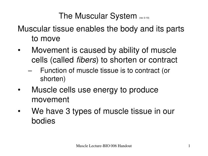PPT - The Muscular System (rev 3-10) PowerPoint Presentation - ID ...