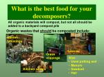 what is the best food for your decomposers