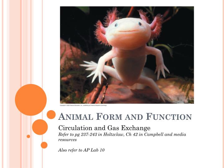 Animal form and function