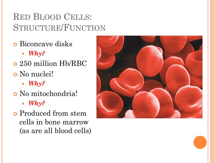 Red Blood Cells: Structure/Function