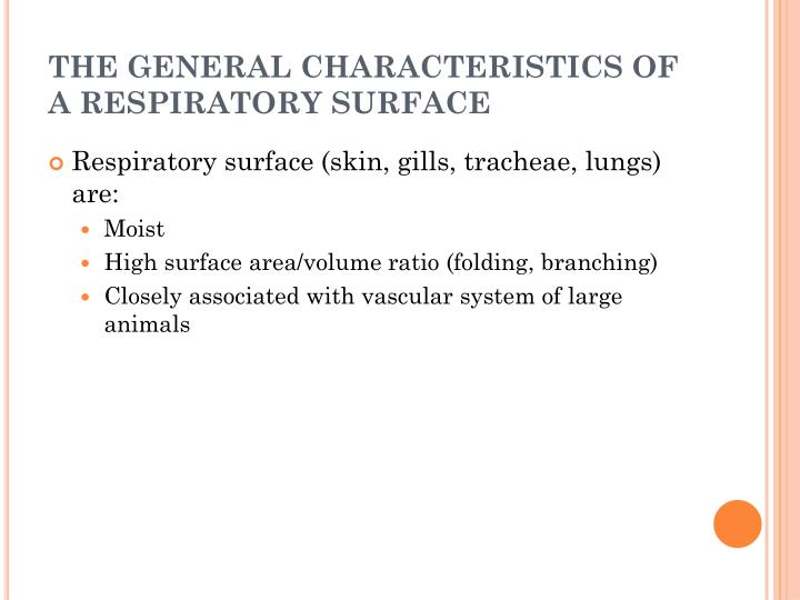 THE GENERAL CHARACTERISTICS OF A RESPIRATORY SURFACE