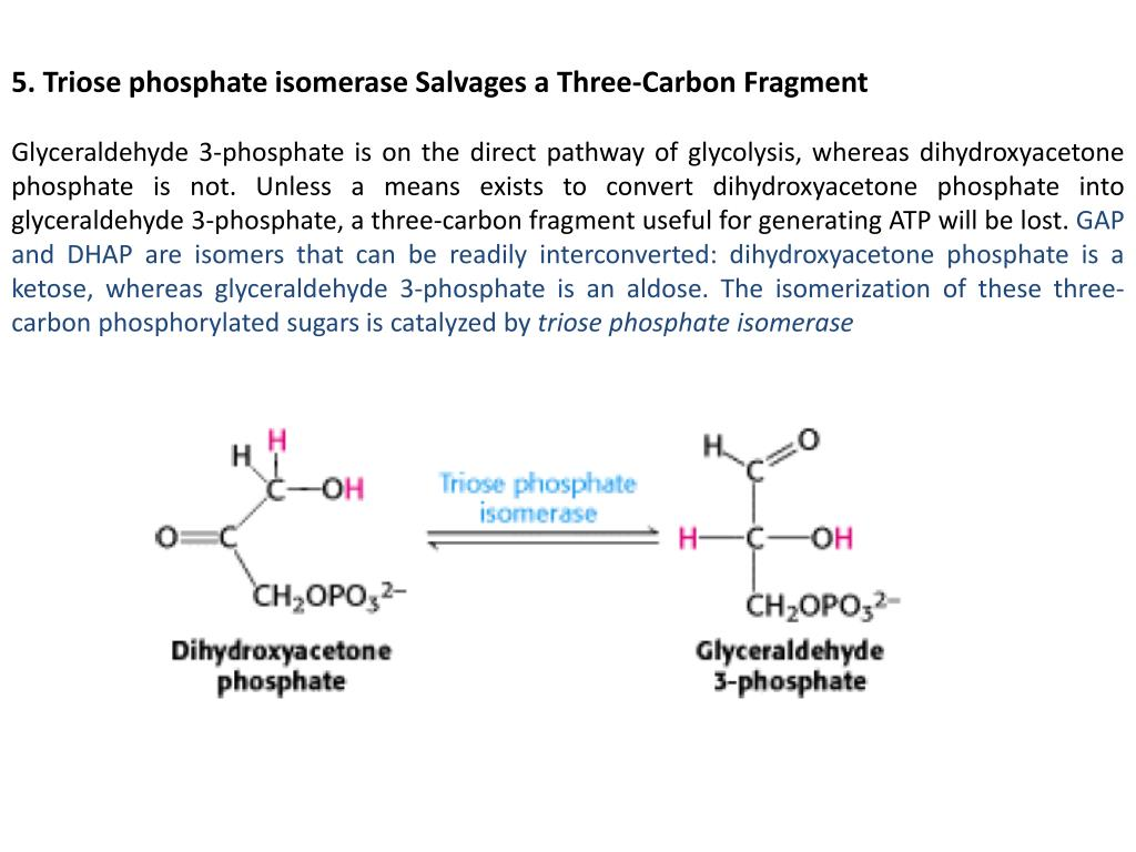 PPT - Carbohydrate Metabolism Glycolysis PowerPoint Presentation, free  download - ID:2953911