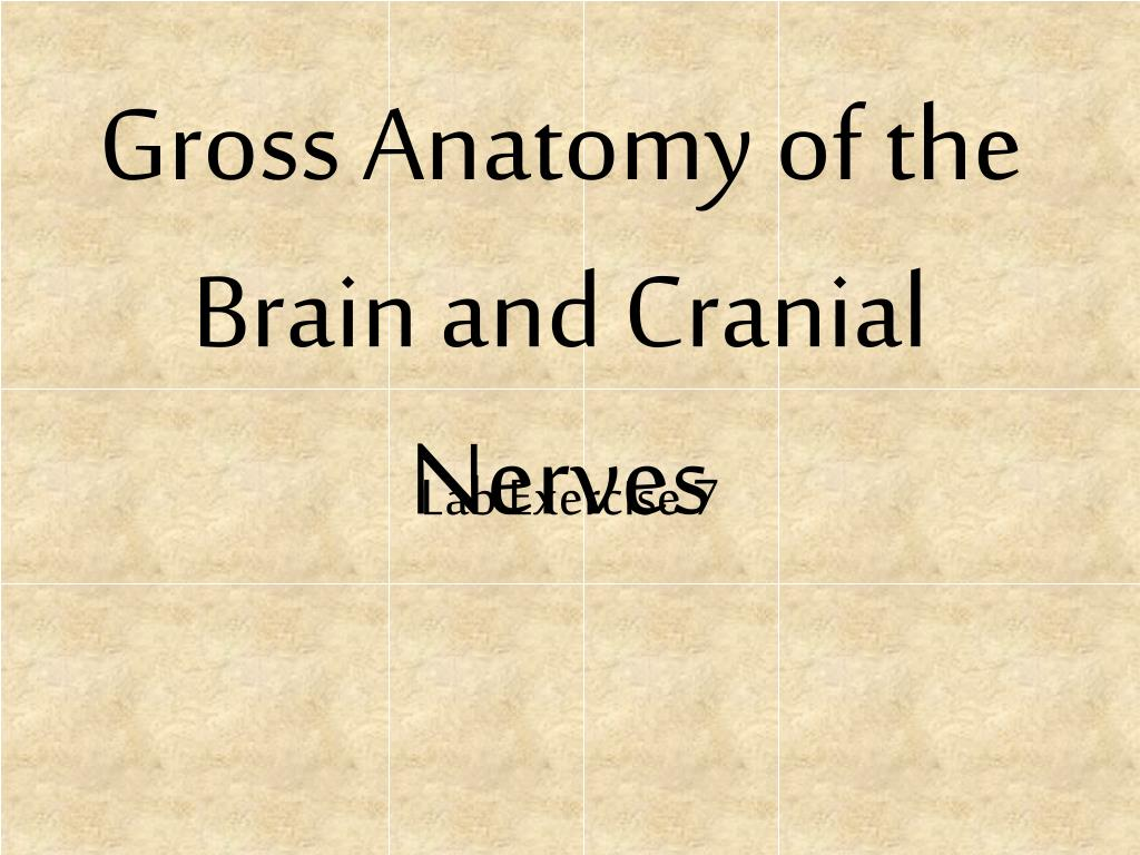 PPT - Gross Anatomy of the Brain and Cranial Nerves PowerPoint ...