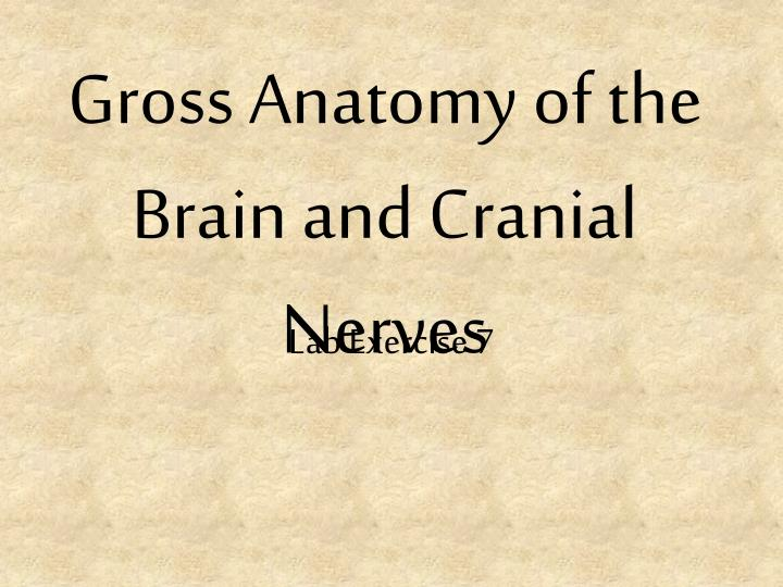 Ppt Gross Anatomy Of The Brain And Cranial Nerves Powerpoint