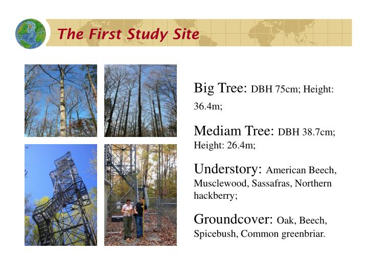 The First Study Site