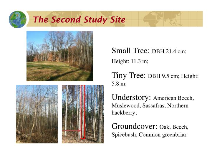 The Second Study Site