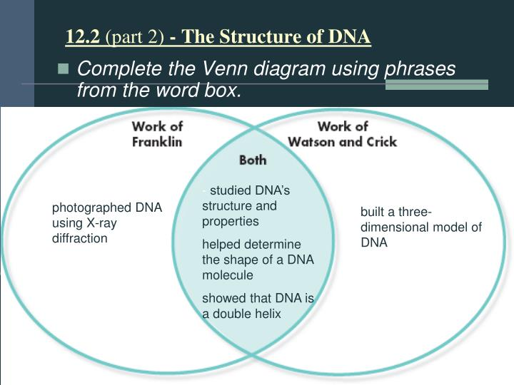 Ppt dnarna powerpoint presentation id2954545 122 part 2 the structure of dna complete the venn diagram ccuart Choice Image