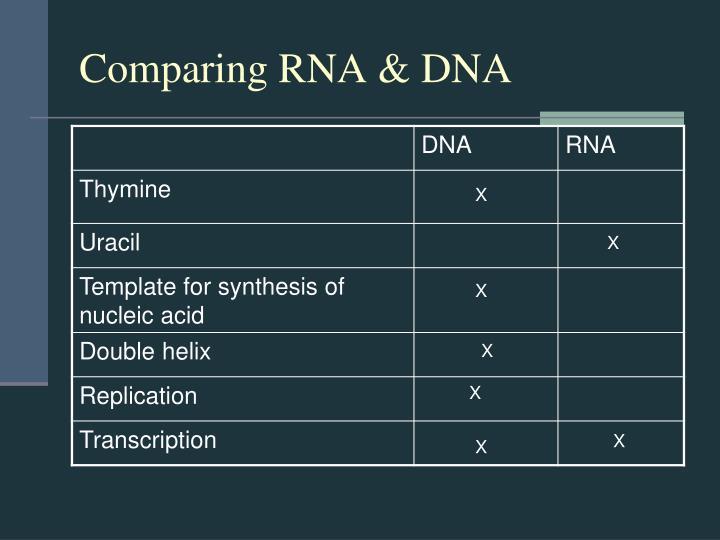 Comparing RNA & DNA