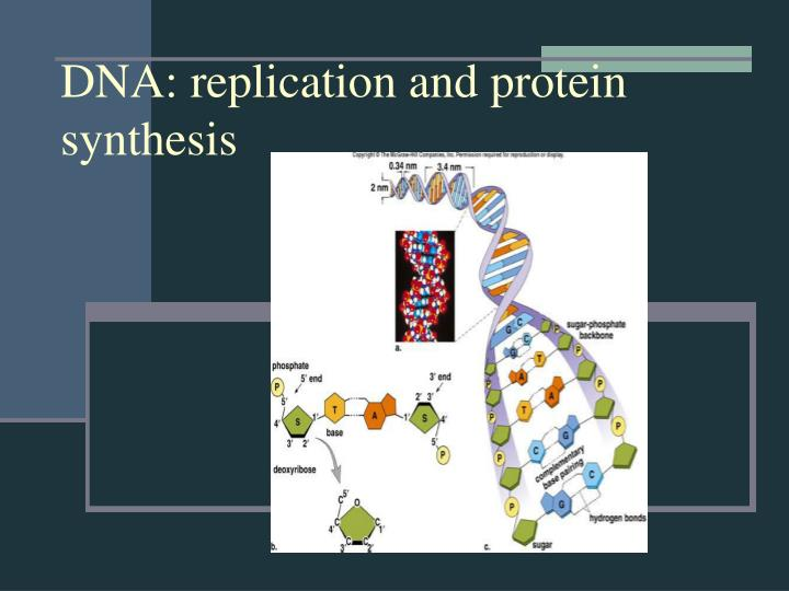 DNA: replication and protein synthesis
