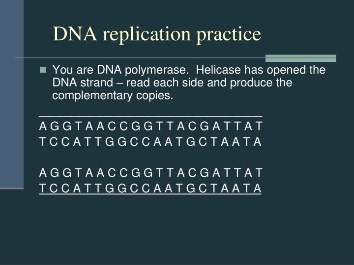 DNA replication practice