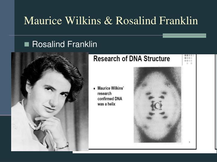 Maurice wilkins rosalind franklin