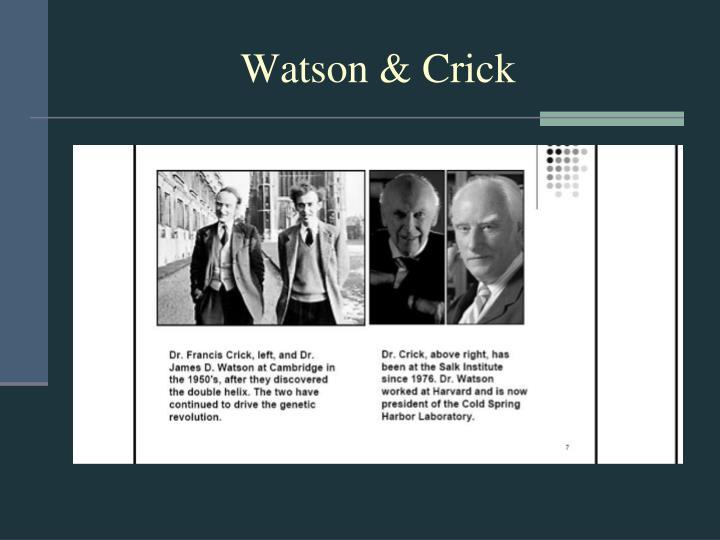 Watson crick