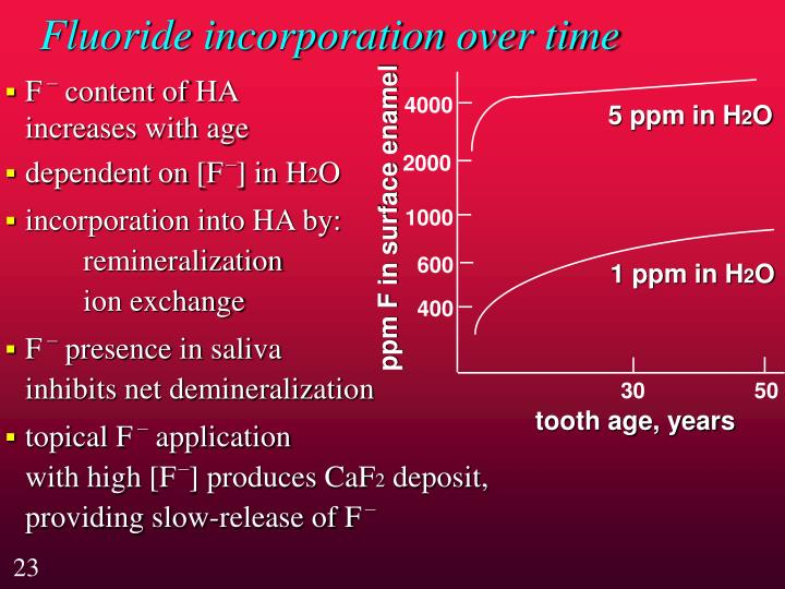Fluoride incorporation over time