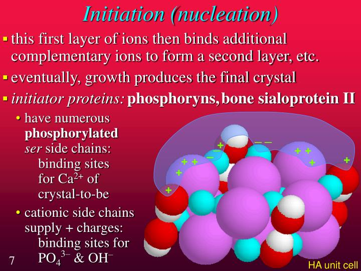 Initiation (nucleation)